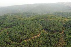 Akdeniz Ormanları Dünyada En İyi 5 Proje Arasına Girdi