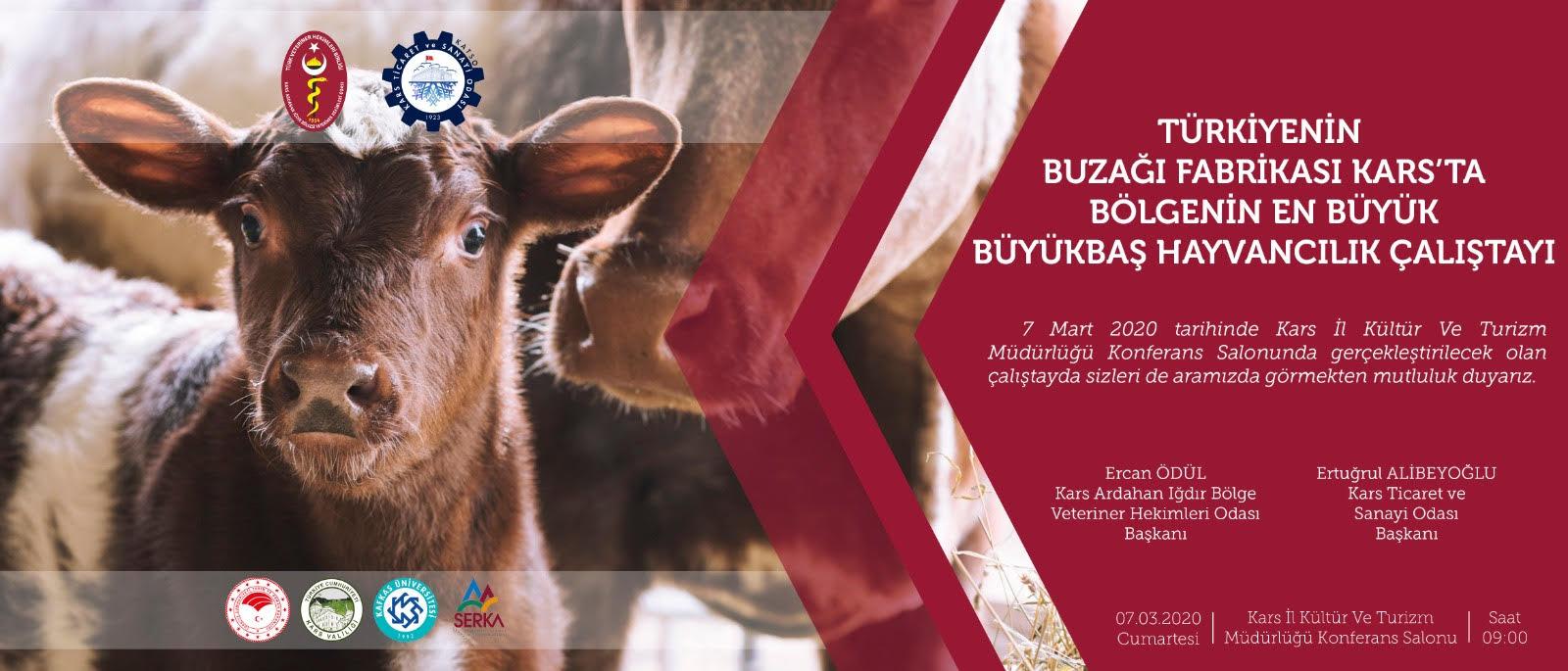 Kars'ta Bölgenin En Büyük Büyükbaş Hayvancılık Çalıştayı Düzenlenecek