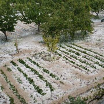 Amasya'da dolu, tarım arazilerine zarar verdi