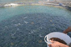 Denizi olmayan kentten 54 ülkeye balık ihracatı