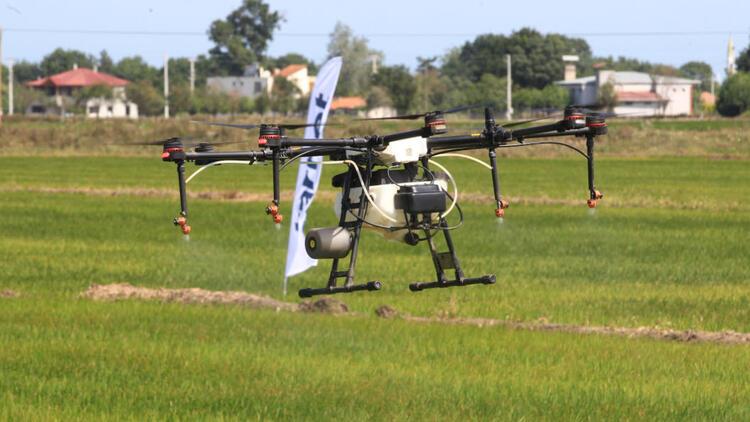 Çeltik tarlaları insansız hava araçlarıyla artık ilaçlanıyor