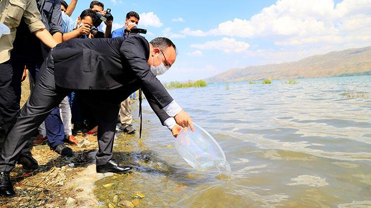 Hazar Gölü'ne 420 bin yavru siraz balığı bırakıldı