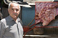 Malatya'da kesilen büyükbaş tüberkülozlu çıktı