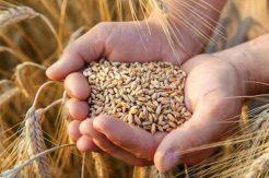 Türkiye'den Lübnan'a buğday desteği